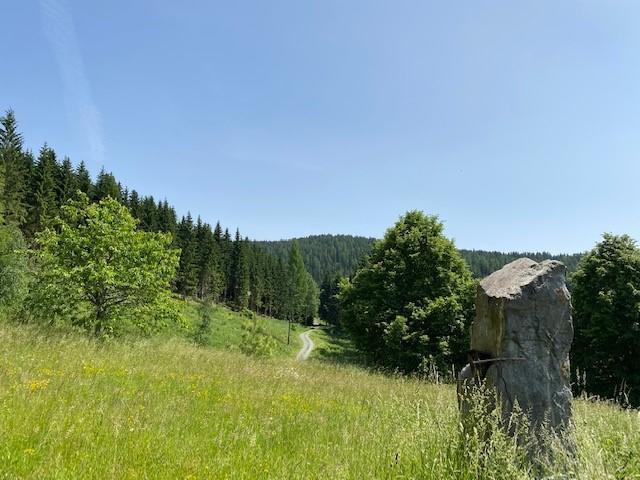 Einfamilienhaus Metnitz kaufen (18)